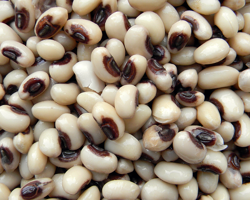 how to grow black eyed beans